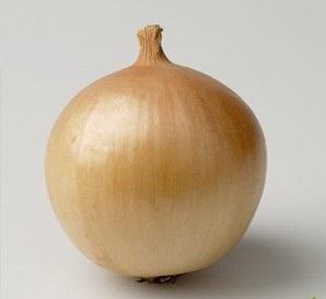 Seminte de ceapa Franzisco (250.000 seminte)