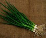 Seminte de ceapa verde Savel (10.000 seminte)