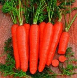 Seminte de morcovi Katop F1 (25.000 seminte)