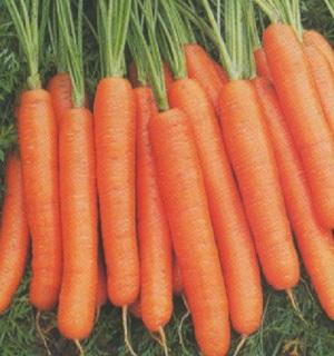 Seminte de morcovi Bengala F1 (25.000 seminte)