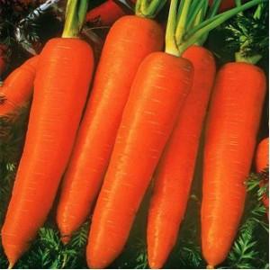Seminte de morcovi Flam (100 grame)