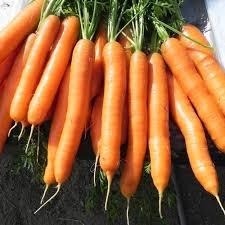 Seminte de morcovi Jerada F1 (25000 seminte)
