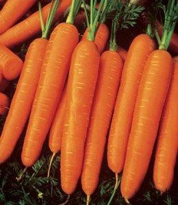 Seminte de morcovi Nt3 Tam Tam (500 grame )