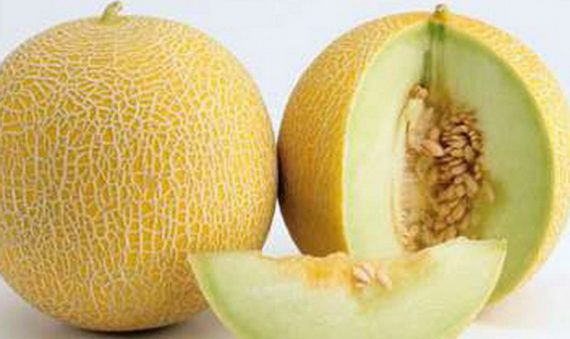 Seminte de pepene galben Exelor F1 (1000 seminte)