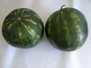 Seminte de pepene verde Bond F1 (500 seminte)