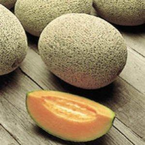 Seminte de pepeni galbeni Portogalia F1 (100 seminte)