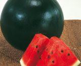 Seminte de pepeni verzi Sugar Belle F1 (500 seminte)