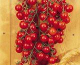 Seminte de rosii Camelia F1 (100 seminte)