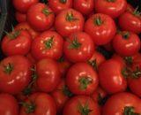 Seminte de rosii Vasanta F1 (1000 seminte)