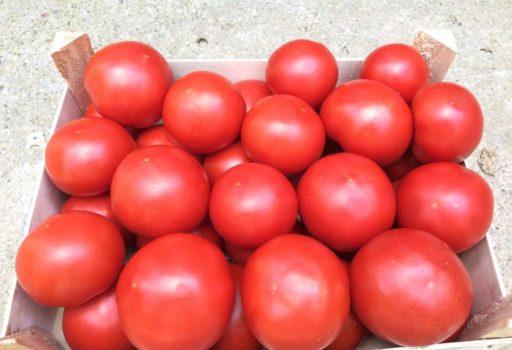 Seminte de rosii Zulfia F1 (1000 seminte)