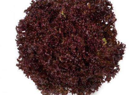 Seminte de salata creata Carmesi (1000 seminte)