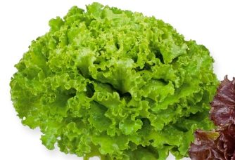 Seminte de salata creata Triathlon (1000 seminte)
