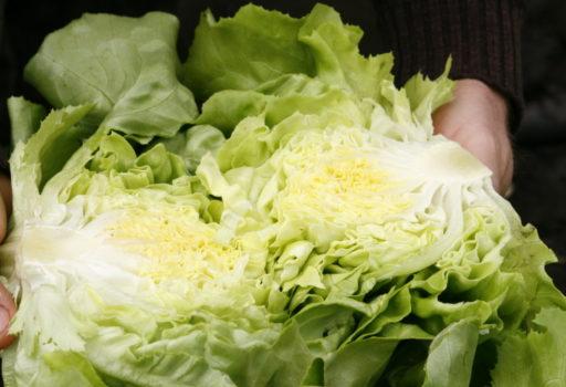 Seminte de salata verde Santoro Drajata (1000 seminte)