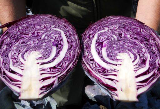 Seminte de varza rosie Rexoma F1 (2500 seminte)