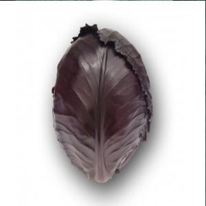Seminte de varza rosie Varna F1 (10.000 seminte)