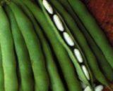 Seminte de fasole pentru boabe Cannellino ( sac 25 kg )
