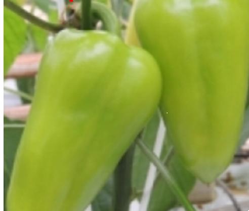 Seminte de ardei gras Posonium F1 ( 1000 seminte )