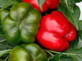 Seminte de gogosar Vitamin F1 (1000 seminte)
