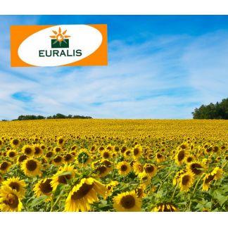 Seminte de floarea soarelui ES Florimis (150.000 seminte)