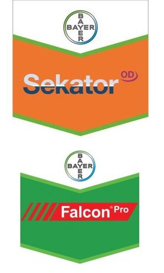 Pachet Cereale Paioase Falcon Pro ( 25 ha )