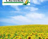 Seminte de Floarea-soarelui EUROPA CLP (150000 Seminte)