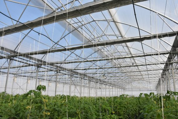 folie agrolen 1 - AGROLEN 180 microni UV / EVA / IR / AF
