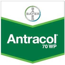 Fungicid Antracol 70 WP (25 kg )