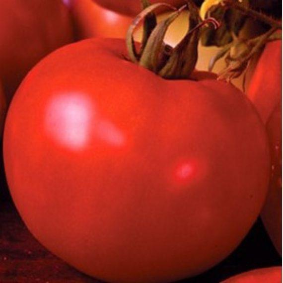Seminte de rosii Marissa F1 (1000 seminte)