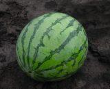 Seminte de pepene verde Bejo 3038 F1 (200 seminte)