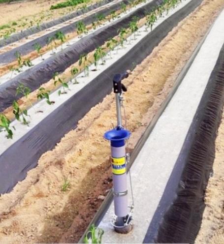Plantator Rasaduri