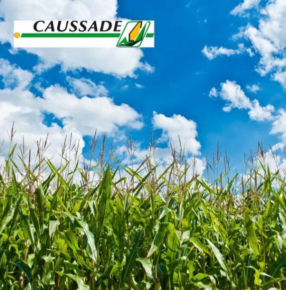 Seminte de Porumb SISTEM DUO 610  FAO 500 (2 x 50000 Seminte)