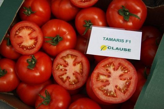 Seminte de rosii Tamaris F1 (1000 seminte)