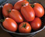 Seminte de rosii prunisoare Plum Regal F1 (1000 seminte)