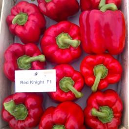 Seminte de ardei gras Red Knight F1 (500 seminte)