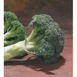 Seminte de broccoli Chevalier F1 (1000 seminte)