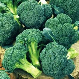 Seminte de broccoli Ironman F1 (1000 seminte)
