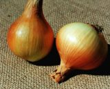 Seminte de ceapa romaneasca Orizont (1kg)