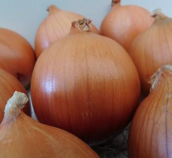 Seminte de ceapa Campero F1 (1.000.000 seminte)