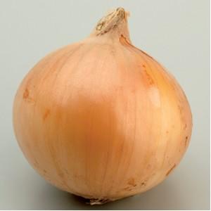 Seminte de ceapa Cassiopea (250.000 seminte)