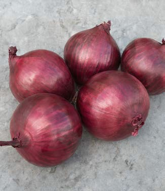 Seminte de ceapa rosie Robin (250.000 seminte NS)