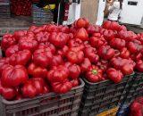 Seminte de gogosar Bihar F1 (500 seminte)