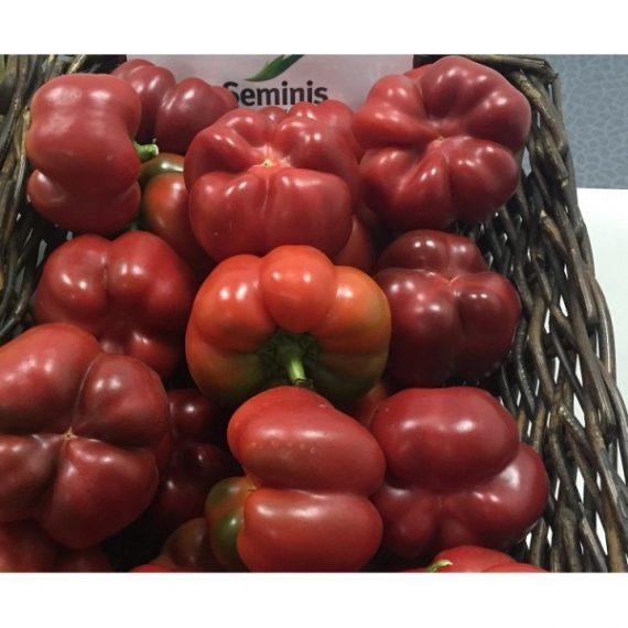 Seminte de gogosar Gogomax (500 seminte)