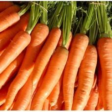 Seminte de morcovi Brillyance F1 (100.000 seminte) 1.6-1.8