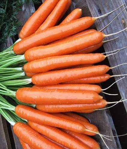 Seminte de morcovi Elegance F1 (100.000 seminte)