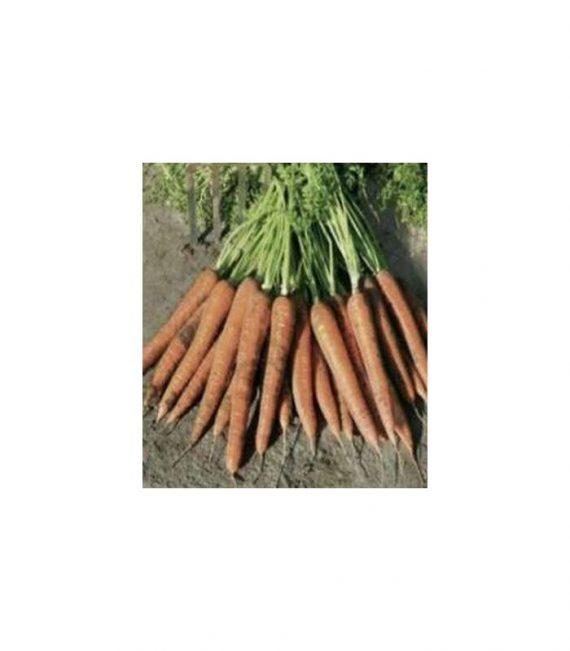 Seminte de morcovi Newhall F1 (25000 seminte)