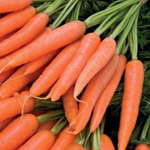 Seminte de morcovi Sirkana F1 (100.000 seminte) 1.6-1.8