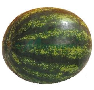 Seminte de pepeni verzi Sorento F1 (1000 seminte)