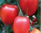 Seminte de rosii Peradur F1 (1000 seminte)