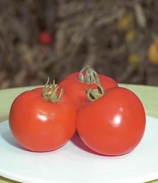 Seminte de rosii Polfast F1(5g)
