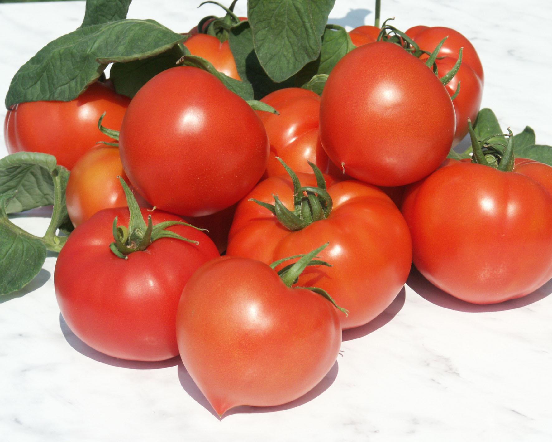 Seminte de rosii Prekos F1 (1000 seminte )